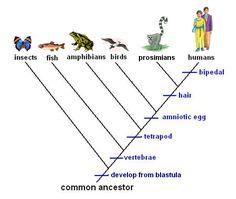 Animalia - cladogram. (simplified, but pretty) | Science ...