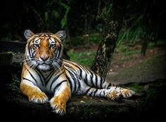 Taman Nasional Tesso Nilo Riau