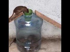 Mouse Traps That Work, Rat Traps, Reuse Plastic Bottles, Trap Door, Amazing Life Hacks, Diy Storage, Pest Control, Rats, Woodworking Projects