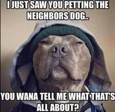 17 Ideas for dogs memes pitbull Cute Animal Memes, Animal Jokes, Funny Animal Videos, Cute Funny Animals, Funny Animal Pictures, Cute Baby Animals, Funny Cute, Animals Dog, Funny Dog Memes