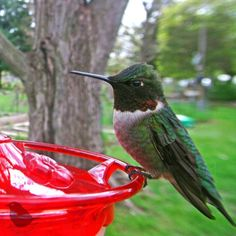 Woman Sets Up A Feeder Cam In Her Yard And The Photos Are Extraordinary (30 New Pics) Survival Prepping, Survival Skills, Tray Styling, Funny Expressions, Humming Bird Feeders, Bird Pictures, Exotic Birds, Colorful Birds, Bored Panda