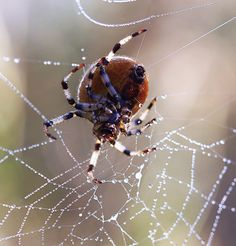 Spiders making web.