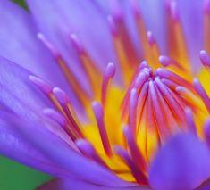 Beauty #flower #photography