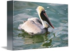 """""""Brown Pelican in the Bay"""" by Carol Groenen, Tampa //  // Imagekind.com -- Buy stunning fine art prints, framed prints and canvas prints directly from independent working artists and photographers."""