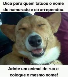 #ficaadica #tattooedgirls #tatoo #descontração #frasedodia #instaanimal #pet #petsagram #animallover #instalove #love #cute #animallover #petsofinstagram  #instagood #instalove #instaartist #instaarte #cutecute #like4like #tagsforlikes #puppy #pet #pets #petsofinstagram #petstagram #love #curiosidades #mundo #mundodosbichos #cachorro #dog #pets #goldenretrieverworld #lovepuppies #love #frases