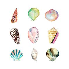 5 x 7 Shell Collection Print. Watercolor Sea by SnoogsAndWilde Art And Illustration, Arte Inspo, Kunst Inspo, Seashell Painting, Seashell Art, Watercolor Sea, Watercolor Paintings, Tattoo Watercolor, Painting Art