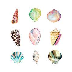 Sea Shell Collection Watercolor Print. Beach House Decor