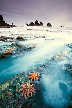 Starfish Colony, New Zealand