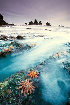 Starfish Colony, New Zealand