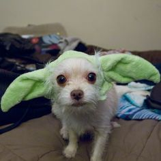 """This Yoda who wants to share some snuggling wisdom with you. 