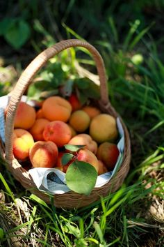 oh my, fresh Georgia peaches in a lovely basket - perfection!