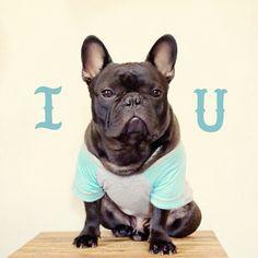 'I ❤️ U', French Bulldog