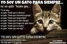 Tu gato para siempre