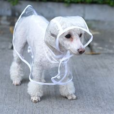Waterproof Dog Clothes Raincoat Transparent Rain Coat Pet Dog Clothes Raincoat Clothes For Small Dogs Chihuahua Clothing Pet Fashion, Animal Fashion, Fashion Beauty, Latest Fashion, Fashion Design, Fashion Trends, Pet Dogs, Dogs And Puppies, Pet Puppy