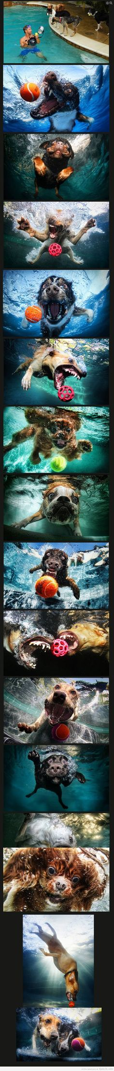 A Pack of Diverse Water Loving Dog Breeds + An Underwater HD Camera =