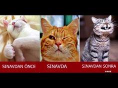 Sosyal Medyayı Kasıp Kavuran En Komik Kedi Capsleri - YouTube Funny Cat Memes, Funny Cats, Funny Animals, Cute Animals, Just For Fun, Have Fun, Turkish Soldiers, Fake Girls, Funny Happy