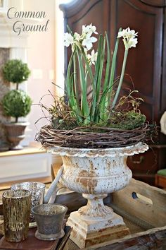 Living Room and Leopard Print Pillows Grapevine used to add texture to potted plant in antique urn.Grapevine used to add texture to potted plant in antique urn. Container Plants, Container Gardening, Succulents In Containers, Decoration Shabby, Beautiful Decoration, Garden Urns, Diy Garden, Garden Club, Spring Garden