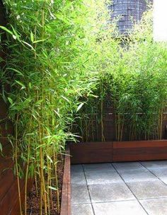 Simple and Creative Tips and Tricks: Easy Backyard Garden Fence large backyard garden beautiful.Simple Backyard Garden How To Grow. Garden Privacy, Backyard Privacy, Backyard Fences, Garden Fencing, Backyard Landscaping, Privacy Hedge, Bamboo Privacy Fence, Outdoor Privacy, Bamboo Screen Garden