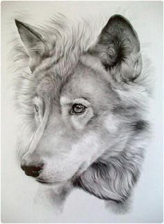 194 Meilleures Images Du Tableau Dessins Loups Drawings Fantasy