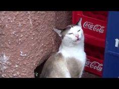 El gato borracho.