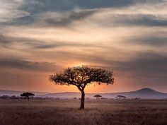 What to Pack for an African Safari The Animals, Rafting, Africa Safari Lodge, Der Leopard, Kairo, Elephant Pictures, Applis Photo, Countries To Visit, Out Of Africa