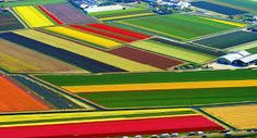 tulipán mezők – Google Kereső Heart Photography, Abstract Photography, Aerial Photography, Map Quilt, Quilts, Dutch Tulip, Amsterdam Holland, Tulip Fields, French Photographers