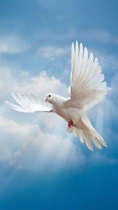 Animal White Dove beautiful dove wallpapers with clear blue sky Dove Images, Dove Pictures, Jesus Pictures, Pretty Birds, Beautiful Birds, Image Jesus, Christian Artwork, Dove Bird, Image Nature