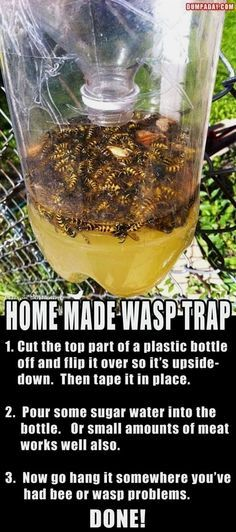 We did some research and found some great ideas and tutorials to help you create DIY wasp traps and other wasp solutions for your backyard and garden. #gardeningideas