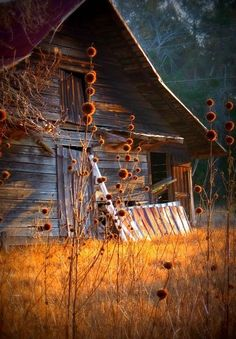 At our farm/cabin, we have 2 very old dilapidated barns.  I am drawn to them.
