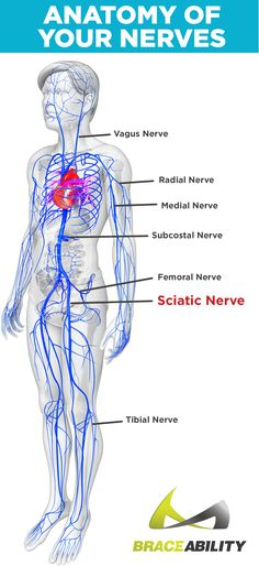 The Difference Between a Compressed Nerve and Sciatica in Your Nerve