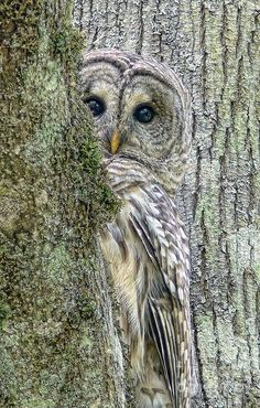 i think i'm officially obsessed with owls of all kinds - they're just so interesting and mysterious and beautiful