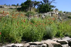 Montana Native Plants Outdoor, Plants, Meadow, Wildflower Seeds, Home And Garden, Landscape, Outdoor Spaces, Wild Flowers, Native Plants
