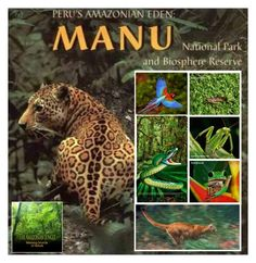 """PERU'S MANU NATIONAL PARK"" by bb60477 ❤ liked on Polyvore featuring art"