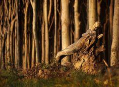 camouflage-bodypainting-metamorphosis-leonie-gene-jorg-dusterwald-15-5718a9a84d30a__700