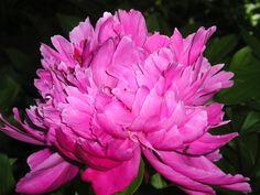 Order Life Is a Garden Party via WestBow Press. To read samples, click on http://lifeisagardenparty.blogspot.com