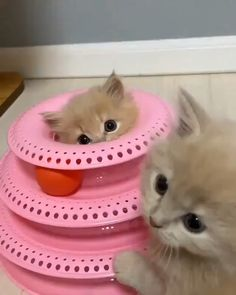 Adorable Kittens Videos Cats And Kittens - Cutest Baby Animals Cute Kittens, Cute Baby Cats, Cute Babies, Baby Animals Super Cute, Cute Little Animals, Cute Funny Animals, Funny Cats, Beautiful Cats, Animals Beautiful