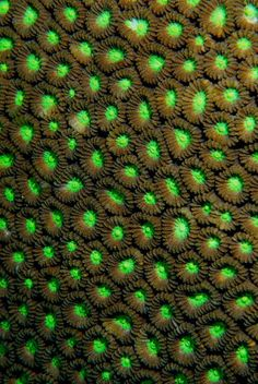 Image result for texture coral