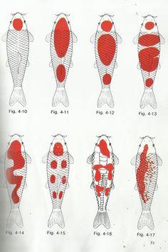 different kohaku koi pattern diagram photos #kohakukoifishdiagram #typesofkohaku #kohakukoifish #koifish