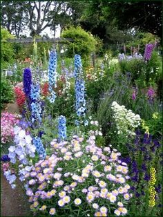 Libby grows an English cottage garden full of delphiniums, hollyhocks, foxgloves, poppies, and peonies. A meandering path edged with brick winds through her garden, connecting the potting shed and the tool shed.