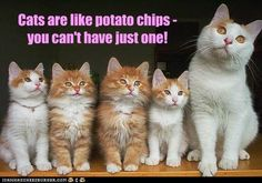 Cats are like potato chips - you can't have just one!