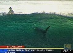 shark attack in sandiego | Great White Shark In Photo Among San Diego Surfers Raises Questions ...