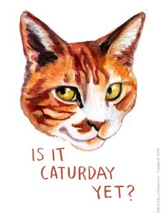 It is Caturday yet?