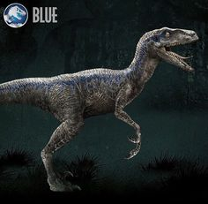 velociraptor jurassic world blue - Google Search