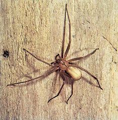 9 of the World's Deadliest Spiders-Encyclopedia Britannica