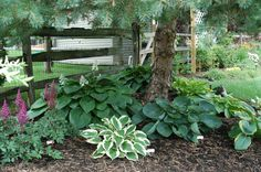 38 Amazingly Green Front-yard & Backyard Landscaping Ideas Hostas Under Pine Tree Garden Landscape Inspirations Landscaping What Grows Trees Ground Cover . azalea plants under pine trees list. shade plants under pine trees trees. Garden Ideas Under Trees, Plants Under Trees, Garden Trees, Trees To Plant, Landscaping Around Trees, Front Yard Landscaping, Shade Landscaping, Shade Trees, Shade Plants