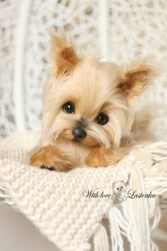 Yorkie Precious Portrait Artist dog mohair collectible toy OOAK puppy Yorkshire Terrier pet handmade animal by photo (made to order)
