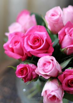 Love Pink Roses ღ Rose Fuchsia Flowers Purple Pretty