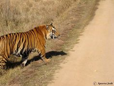 If you like to visit the nature & the environment that shows greenery for that Ranthambore Hotels are the marvelous place to visit. Here, you can find all your choice at one ground the greenery.
