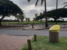 One a recent call out we encountered a huge flock of birds! Right by the Durban beachfront. Flock Of Birds, Pest Control Services, Window Cleaner, Rodents, Flocking, South Africa, Safety, Sidewalk, Cleaning