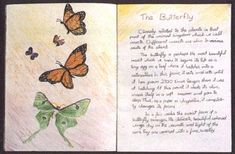 Waldorf ~ 5th grade ~ Botany ~ Butterfly ~ main lesson book